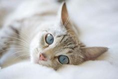 Pretty Lounging Cat Beautiful Cats, Cat Lady, Dog Pictures, Dog Cat, Pretty, Dogs, Cute, Animals, Kawaii Cat