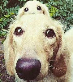 Selfie time  #cutedogs #funnydogs