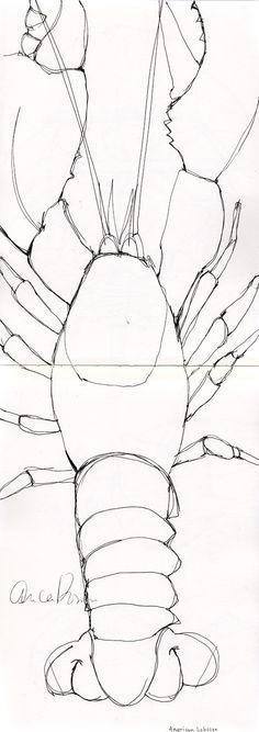Lobster sketch