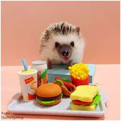 """フードコートから """"ランチ!明らかに、これらの食事の3つのすべては私のためです。お奨めは私の姿を維持しています。」   A Day In The…"""