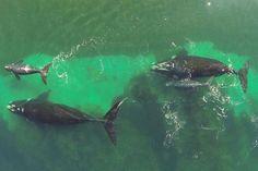 ballenas puerto madryn desde el aire