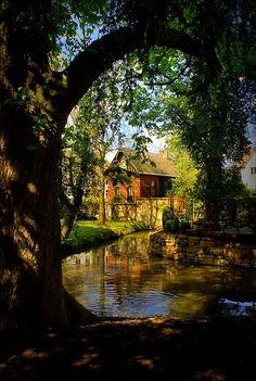 Summer Creek, Dublin, Ireland.                                                                                                                                                     Mais