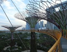 #Singapore's #Supertrees, Gardens by the Bay