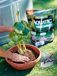 Water Garden Care Guide These tips ensure the water garden plants in your landscape stay healthy and beautiful. Water Garden Plants, Container Water Gardens, Garden Water Fountains, Pond Plants, Container Gardening, Balcony Gardening, Outdoor Plants, Backyard Water Feature, Ponds Backyard