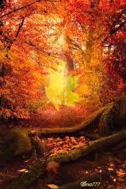 Resultado de imagen de imagenes de bosques