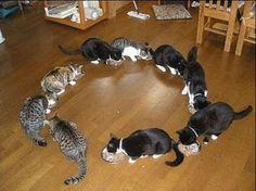 Spaß mit Katzen