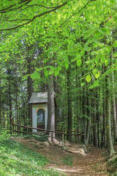 Vintgar szurdok - Belépő 2020, nyitvatartás, parkolás, térkép, Busan, Trunks, Plants, Drift Wood, Tree Trunks, Plant, Planets