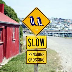Oamaru Harbor, New Zealand - one of those places (besides Antarctica) that is great for swimming with wild penguins. I will go there someday! Also, I want to steal the sign. Moving To New Zealand, New Zealand Travel, Penguin Love, Cute Penguins, Photo Animaliere, New Zealand South Island, Antarctica, Places To See, Around The Worlds
