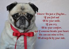 A quote for Pug Lovers from our Bailey Puggins ❤