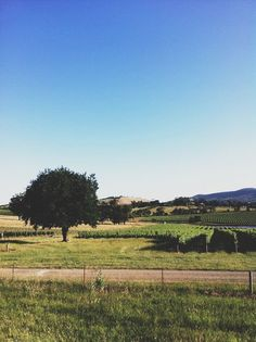 Yarra Valley, east of Melbourne