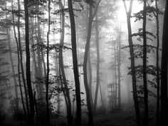 magical forest - ...