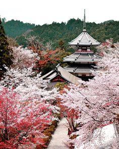 Yoshino Chogu Ruins, Nara, Japan, worldheritage, sakura, cherryblossom