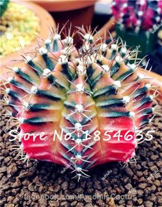Sale 50 Rare African Mixed Seeds Cactus Succulent Plant Tree Purify Air Bonsai In The Heat Resistant Easy Care Creative Semente