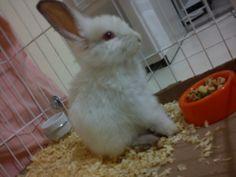 Keno, meu coelho!