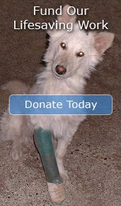 Animal Advocates Society of BC | Videos | Rescued dog's happy ending after 10 years on a chain
