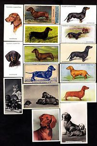 Collection of Vintage Dachshund Dog Cigarette Cards | eBay