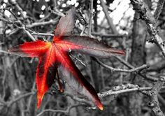 Red is great when you plan to use selective colour in post processing