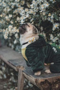 (disambiguation) The pug is a breed of dog. Pug or Pugs may also refer to: The Animals, Cute Baby Animals, Funny Animals, Pug Puppies, Pet Dogs, Pets, Terrier Puppies, Doggies, Baby Pugs