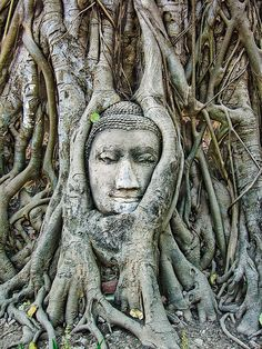 Ayutthaya, full name Phra Nakhon Si, is an ancient capital and modern city in the Central Plains of Thailand, 85 km north of Bangkok... This buddha head sculpture is overgrown by trees....these beautiful ancient ruins of city are what is left after the burmese invaded.These ruins were officially recognized in 1991, when the Historic City became an UNESCO World Heritage Site. www.wikitravel.org/en/Ayutthaya www.wikipedia.org/wiki/Phra_Nakhon_Si_Ayutthaya_