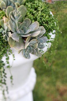 succulent arrangement (in chicago, pintura botanicals can recreate for you)