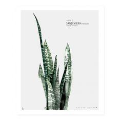 Lámina Decorativa Urban Botanic  - Sansevieria