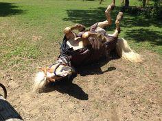 Hafl's pre-show wellness... Exciting days ahead  #hafl #horses #dressage #horseshow #horsesofinstagram #haflingersofinstagram #wellness #trainhardrestharder