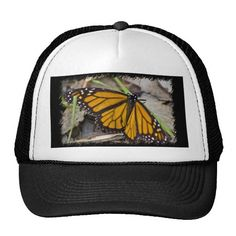Monarch Butterfly Hats by Florals by Fred #zazzle #gift #photogift