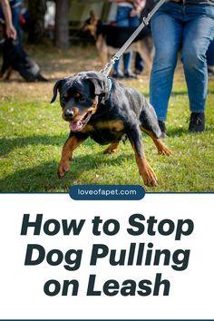 Doberman Dogs, Pet Dogs, Dog Cat, Maltipoo, Yorkies, Training Your Puppy, Training Tips, American Alsatian, Dog Potty