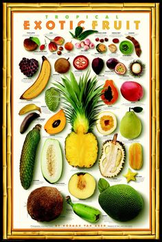 """Exotic Tropical Fruit Poster with 38 photos of fruit w/name & descriptions. Encourage kids to research a fruit, then try something new. Our household is working on a """"New Food Friday"""" where we will select, research and prepare together a food we have never tried.  Fruit is a safe place to start since the odds of it being tasty are probable, even if it's strange looking. First up? Dragon Fruit. Feedback? Interesting, healthy but not """"lunchbox"""" worthy. Next? Blood Orange!"""