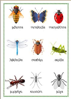 Naming insects in Greek