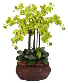 Large Phalaenopsis Silk Orchid in 8 colors | 30 inches