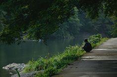 Hodu-Gawa River in Arashiyama / 保津川(嵐山)