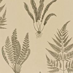 Linen - DAPGWO103 - Woodland Ferns - A Painter s Garden - Sanderson Wallpaper