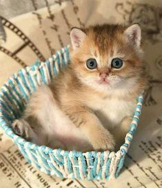Entertain Me Now – Watch Video – Adorable {hashtags - Katzenrassen Beautiful Cats Kittens And Puppies, Cute Cats And Kittens, I Love Cats, Cool Cats, Kittens Cutest, Weird Cats, Ragdoll Kittens, Tabby Cats, Bengal Cats