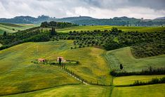 Vineyard, Golf Courses, Italy, Outdoor, Outdoors, Italia, Vine Yard, Vineyard Vines, Outdoor Games