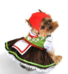 Oh my god! Personally, I think dog costumes are really dumb...but this is just too cute! Lol :D