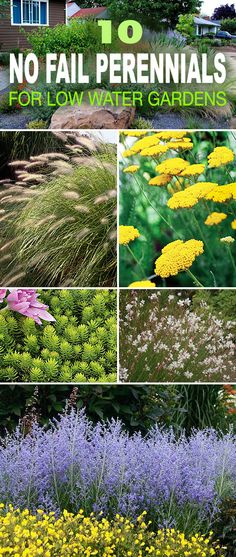 10 No Fail Perennials for Low Water Gardens