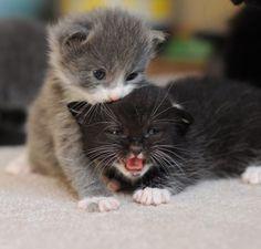 Mew mew little kitties.