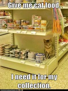 Give me cat food.