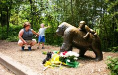 Now Even a Witness to the Cincinnati Zoo Gorilla's Death Is Being Harassed