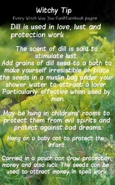 Witchy Tip Dill     ✯ Visit lifespiritssocietyofmagick.com for love spells, wealth spells, healing spells, and LOA info.