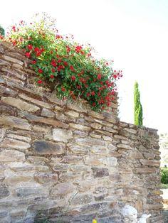 17 de mayo de 2014. Rosas mini. May 17, 2014. Mini roses. Extremadura. España.