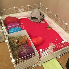 I like the litter box with hay.and the tunnel in This will keep hay and little piggy poo confined. Need to hang hay feeder on the side! Diy Guinea Pig Cage, Guinea Pig Hutch, Guinea Pig House, Pet Guinea Pigs, Guinea Pig Care, Pet Pigs, Diy Guinea Pig Toys, Cages For Guinea Pigs, Guinie Pig