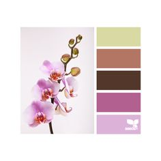 Design Seeds ❤ liked on Polyvore featuring design seeds, color palettes, colors, backgrounds und color seeds