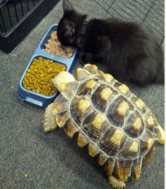 Tortise and Kitten