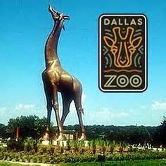 The Dallas Zoo - he loves it. Great children's area, fun tram ride, and you can even feed the giraffes! Oh, and he likes getting his zoo passport stamped & getting a free fossil/rock/shell at the children's area, too. Dallas Zoo, Dallas Texas, Dallas Activities, Family Activities, Giant Giraffe, Birthday Party Places, Birthday Ideas, Country Day School, Mini Vacation