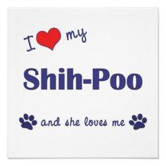 I Love My Shih-Poo (Female Dog) Poster Print