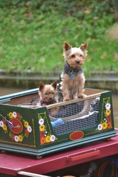 Yorkies on a canal boat by Sharon Wheelock Barge Boat, Canal Barge, Love Canal, Canal E, Castle Painting, Boat Painting, Canal Boat Art, Minions, Pet Transport