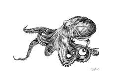 Octopus illustration; Rotring pen. Copyright - Danielle Guess
