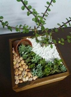 If there's one fast growing trend in plant arrangements, it's the world of ideas for succulent garden. Check out the best outdoor design ideas # succulent Gardening 15 Awesome Succulent Garden Ideas for Uniqueness in Your Garden Succulent Gardening, Organic Gardening, Container Gardening, Flower Gardening, Indoor Gardening, Succulent Plants, Gardening Tips, Succulent Garden Ideas, Indoor Mini Garden
